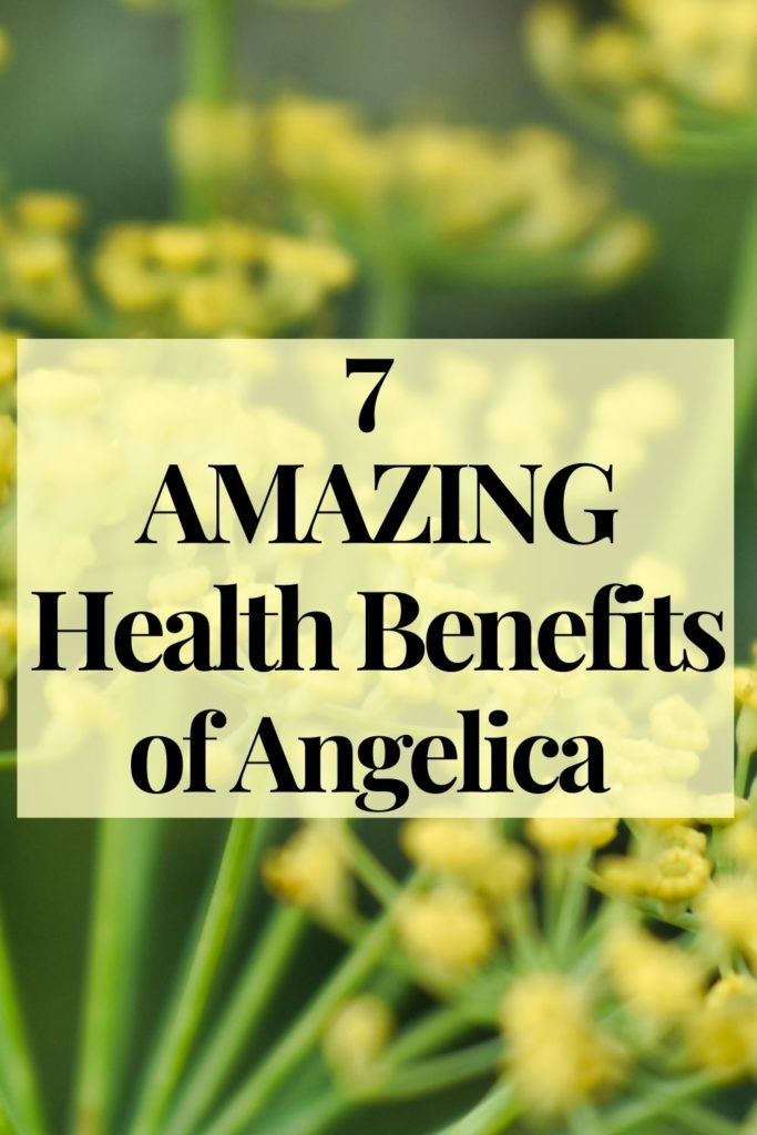 7 health benefits of Angelica, specific dilution instructions, and in what other blends you'll find this amazing plant.