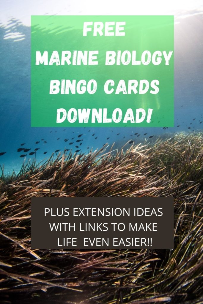This free download for Marine Biology Bingo Free Printables pairs perfectly with homeschool or classroom lessons.